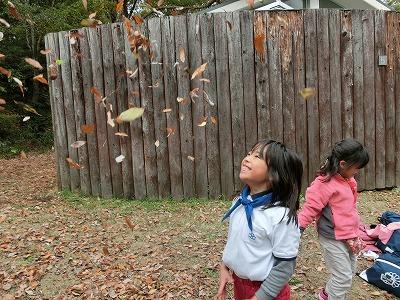 かぶにゅー賞秋「下に落ちていく落葉」